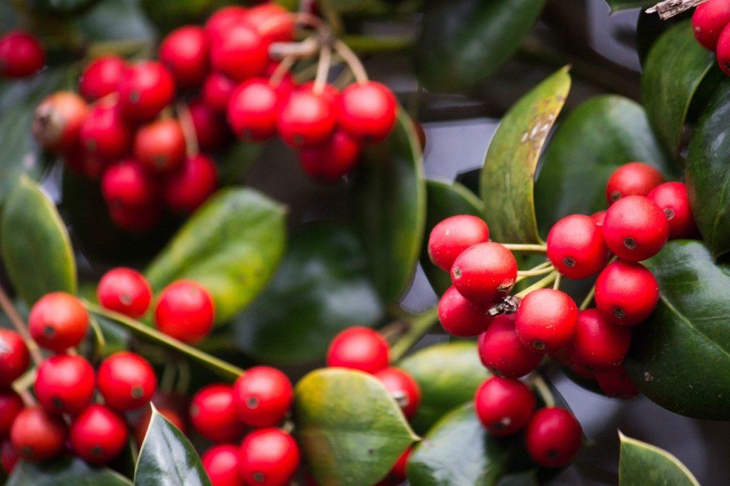 Nguồn gốc cây cà phê Arabica