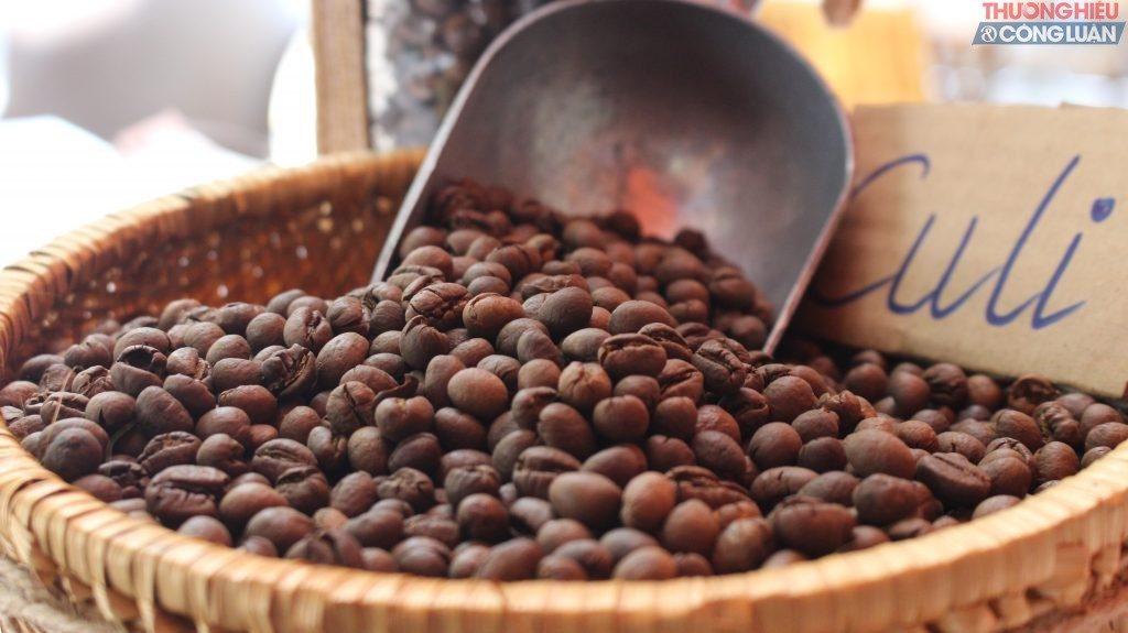 Cà phê Culi trồng ở đâu?