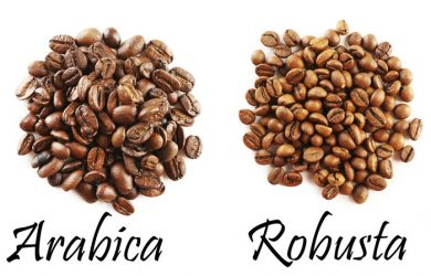 Cà phê Arabica và Robusta